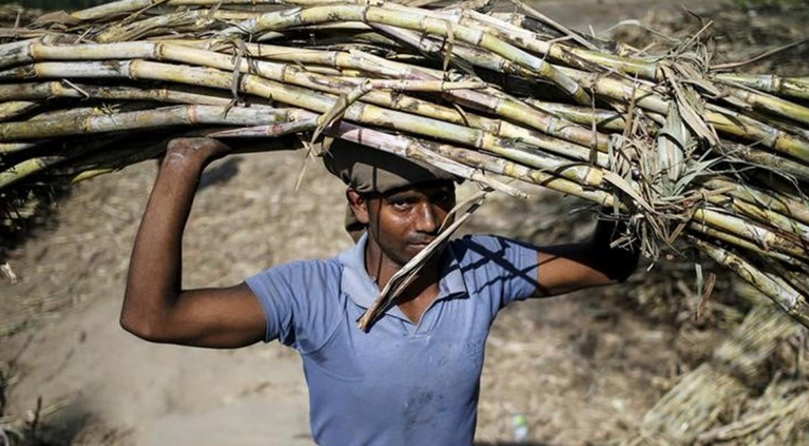 India to produce surplus sugar in 2017/18