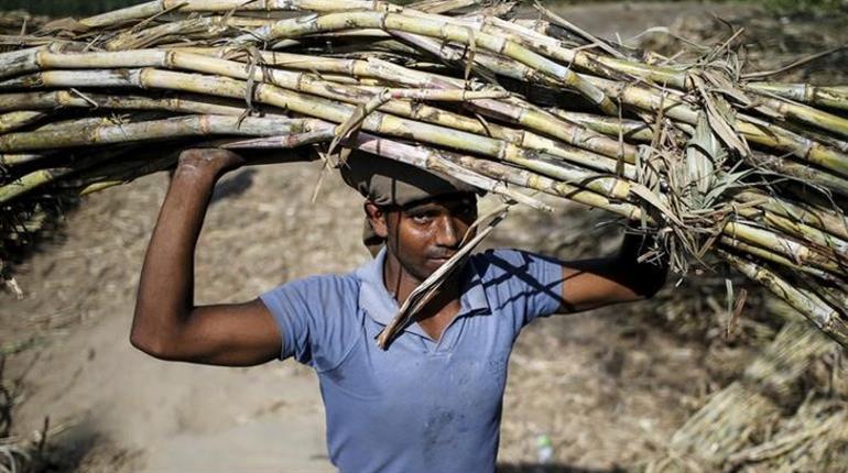 India to produce surplus sugar in 2017/18