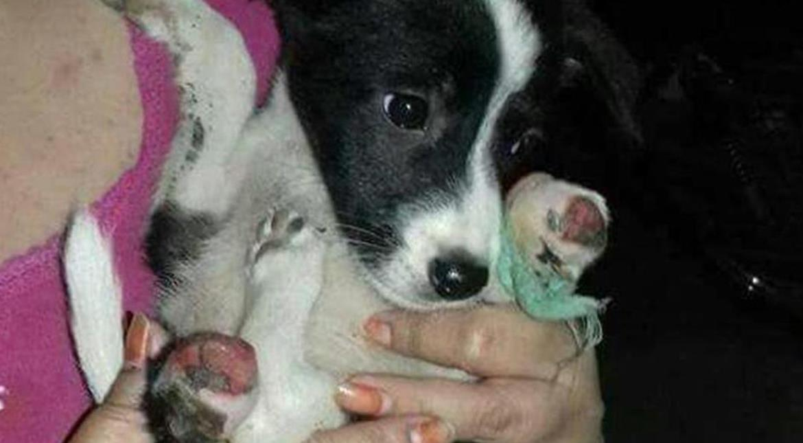 India: Man chops off puppy's legs with blade in New Delhi