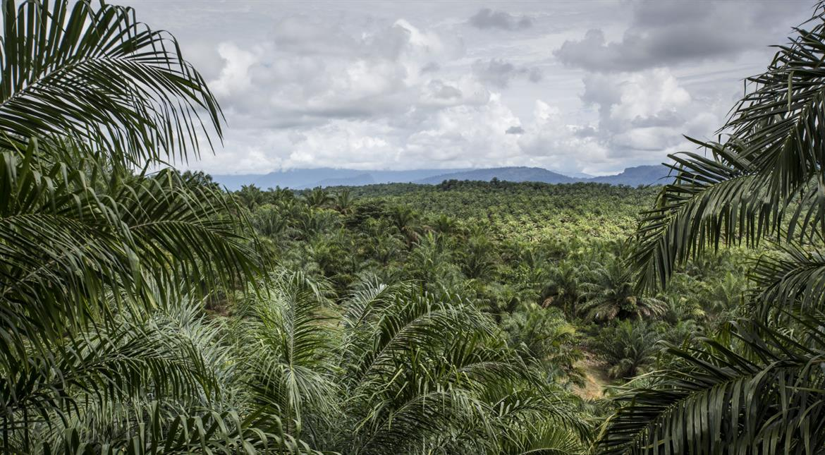 After Asia, palm oil faces backlash in Africa