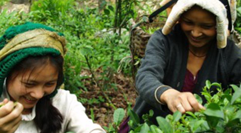 International Tea Day: How fair is your chai?